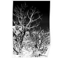 Desert Trees - Moab, Utah Poster