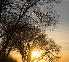 Early Gold Through the Willow Branches - A Sunrise on the Shore of Lake Ontario by Georgia Mizuleva