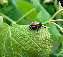 Japanese Beetle by Abigail Shirley