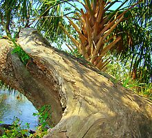 Split Oak Tree by Wanda Raines