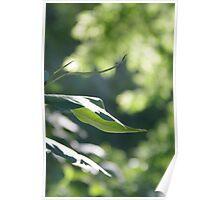 Sunlight Capture Poster