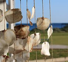 Shells hanging, Cervantes store, winter morning by Becncall Bec Lloyd