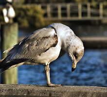 Down And Out In Cedar Key by Rick  Bender