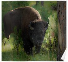 Bison in Forest Poster