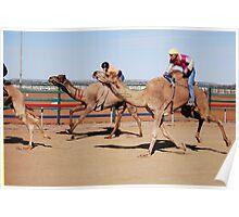 Racing Camels Poster