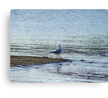testing the waters  Canvas Print