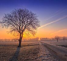 ~Frosty Morning~ by Delfino