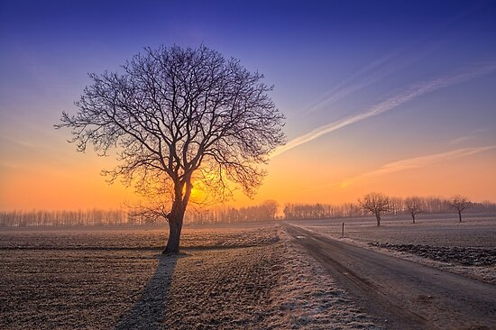 ~Frosty Morning~ by Delfino