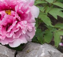 Peony on the Rocks - the Marvels of Spring Sticker