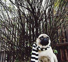 Pug In a Scarf by Katie Weychardt