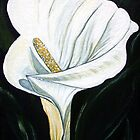 Calla Lily  by © Linda Callaghan