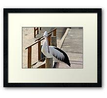 Pelican, Monkey Mia, Western Australia Framed Print