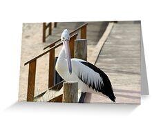 Pelican, Monkey Mia, Western Australia Greeting Card