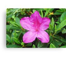 Mauve Flower - Toowoomba Japanese Gardens Canvas Print