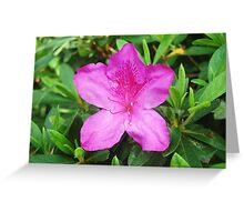 Mauve Flower - Toowoomba Japanese Gardens Greeting Card