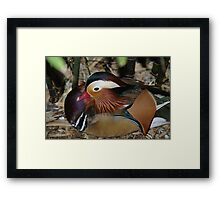 resting in the undergrowth  Framed Print