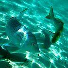 Spangled Emperor 6, Ningaloo Reef, Coral Bay by ladieslounge