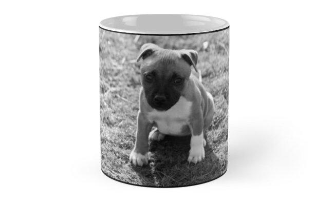 Staffordshire Bull-Terrier Puppy by ImageMonkey