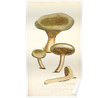 Coloured figures of English fungi or mushrooms James Sowerby 1809 0171 Poster