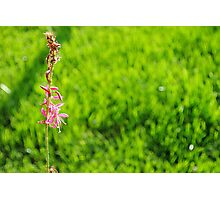 The undead deceased flower that still lives Photographic Print
