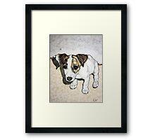 Dixie Belle Framed Print