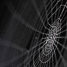 Web by BlaizerB