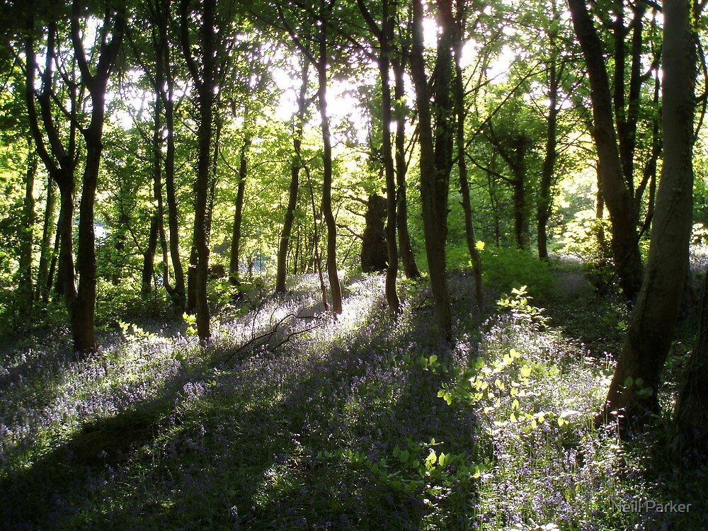 Sunlight In Trees. by Neill Parker
