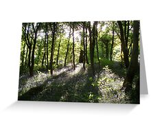 Sunlight In Trees. Greeting Card
