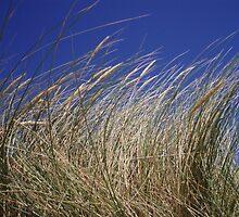 Perranporth Grass. by Neill Parker