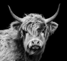 Highland Cow In Black And White by Linsey Williams