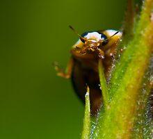 Peek-a-boo! by George Parapadakis (monocotylidono)
