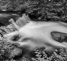 Mountain Stream Waterfall in Black and White by Bo Insogna