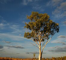 Lone Gum Tree in the Central Australian Outback by Sean  Carroll