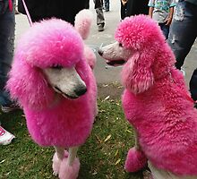 Pink Poodles by Janette Anderson