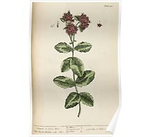 A curious herbal Elisabeth Blackwell John Norse Samuel Harding 1737 0488 Orpine or Live Lone Poster