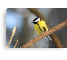 Tit bird on the tree like a watercolor Canvas Print