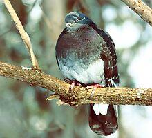 kyiv pigeon by a1luha