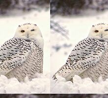 Snowy Owl's Wink by BBrightman