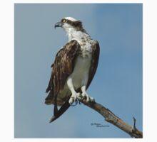 Handsome osprey hawk One Piece - Long Sleeve
