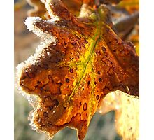 Leaf-light Photographic Print