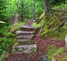Stairs to Beech Mountain by Dandelion Dilluvio