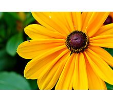 A bug and his big yellow flower Photographic Print