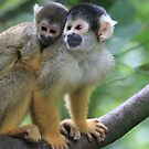 Squirrel monkey by DutchLumix