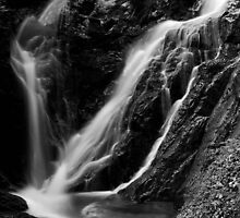 Torrent Froda V by jimmylu