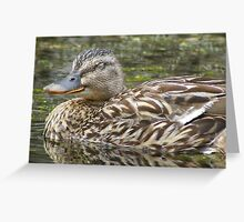 forty winks - quack! Greeting Card