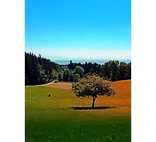 Another lonely tree in summer Photographic Print