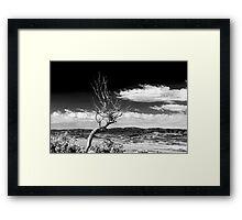 Utah Tree Framed Print