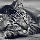 Sleeping Cat - enjoy the dream by Komang