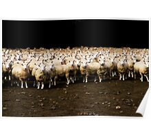 Photo Shooting of 2000 Sheeps Poster