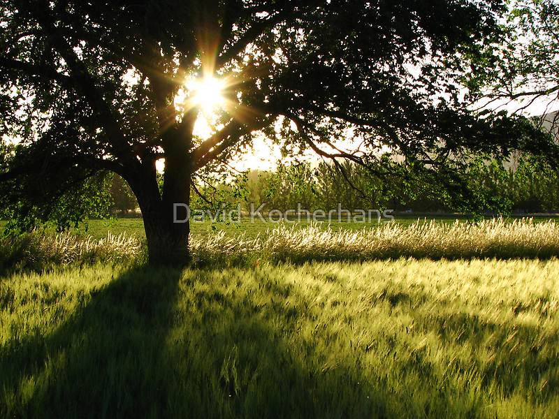 Summer Fields by David Kocherhans